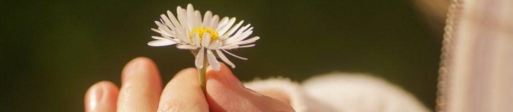 fleur tenue entre deux doigts